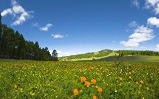台湾古典诗:春风