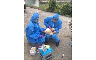 防候鸟传播 高市加强鸭场禽流感检疫