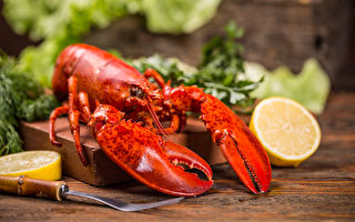 將龍蝦丟入沸水活煮違法 瑞士修法保護龍蝦:牠覺得很痛