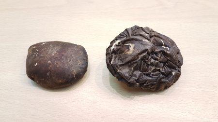 中國菇(左)與台灣菇(右)正面照