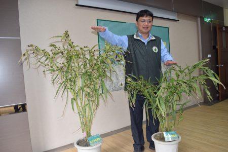 台中农改场研究员廖宜伦说明薏苡3号和5号的不同。