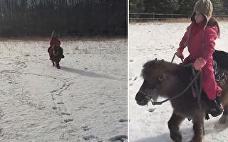 小女孩雪地骑小马 惊奇客人跃上鞍子搭便车