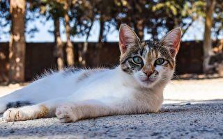 日本流浪貓找到樂園 鑽蹦躍飛樣樣來 樂翻攝影師