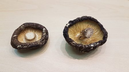 中國菇(左)與台灣菇(右)背面照