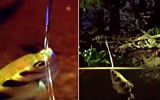 魚兒暗夜噴水 沒想到這竟是牠捕獵的獨家絕招