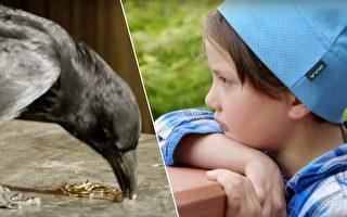 女童喂野鸟获赠礼物 这天它叼回来的物品 让妈妈落泪