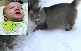 男婴遭弃寒冬街头 流浪猫跳进纸箱护暖呼救