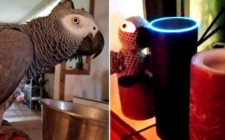 鸚鵡偷用Echo選購商品 訂購清單讓主人笑到滿臉淚