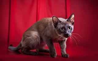 猫咪突染怪癖 让主人硬头皮在社区张贴超尴尬告示