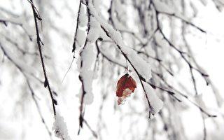 大到暴雪 京津冀等多地积雪将超8厘米