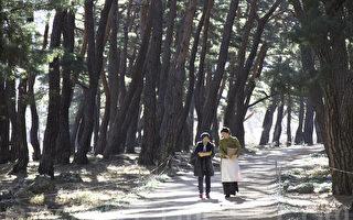 漫步松林小径 体验韩国冬日风情