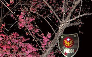 组图:夜赏全台最美的泰安派出所樱花