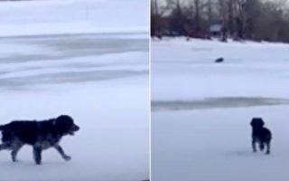 小狗突然汪汪叫 原來是一隻巨大的動物困在冰湖裡