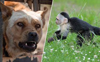 當猴寶寶衝向一隻大狗時 人們都驚呆了 沒想到下一刻⋯