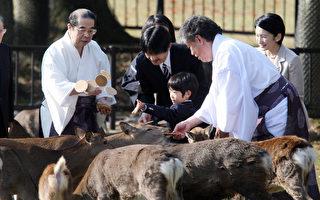 日本奈良鹿攻击游客事件暴增 中国人占八成
