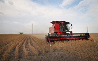 中共拿大豆报复美太阳能关税 或砸到自己脚