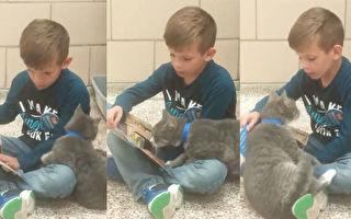 男孩给收容猫咪读书 猫看到书 另有妙主意