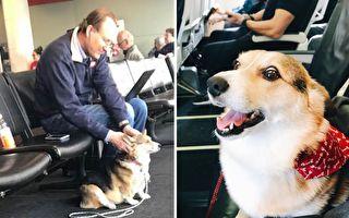 柯基犬善解人意 机场见一男子 立即坐他面前安慰