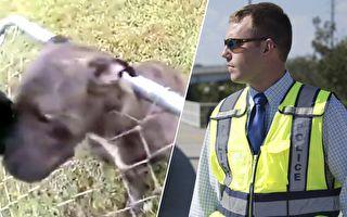 絕望狗狗頭卡籬笆 看警察怎樣解救牠 超威風