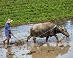 古希臘寓言 公牛開口講哲理