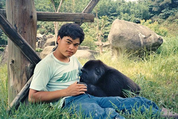 金剛猩猩赴荷蘭 台灣準備六禮歡送祝福