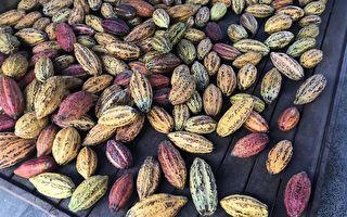 一口一万美元 全球最贵巧克力配方公开