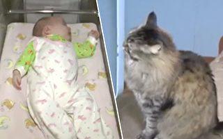 流浪猫突然喵喵大叫 人们打开门发现惊喜 原来它是小英雄