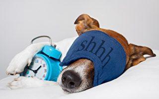 Let sleeping dogs lie 让正在睡觉的狗接着睡吧