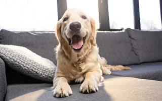房客有寵物,房東應注意什麽?