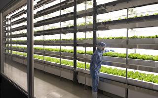 蔬菜養分喪失80% 現代種植讓我們失去什麼?
