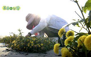 銀行白領轉行做花農 她馴化有機黃杭菊的經歷讓人感動