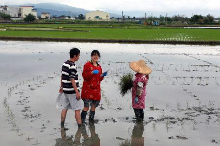 插秧達人正在進行彩繪稻田。