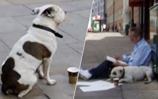 逆轉人生 一隻狗改變了一名流浪漢的人生