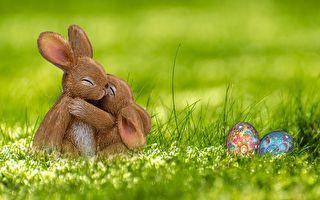 許其正:兔子