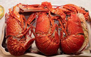 渔民捕获龙虾界寿星 当它露出钳子 所有人目瞪口呆