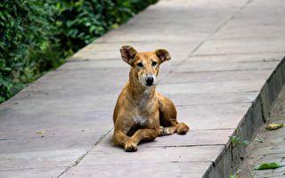 疲病交瘁的老流浪狗待斃街頭 7個月後綻放生命的光芒