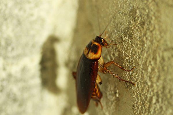 安徽快三走势图:蟑螂的生存能力再次说明进化论不合理