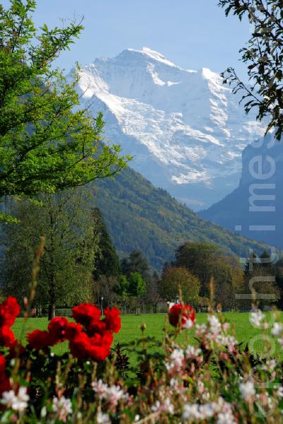 Der berühmte Berg \