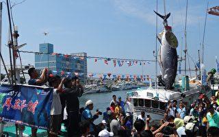 """""""第一鲔""""入港拍卖 南台湾黑鲔鱼季吹响号角"""