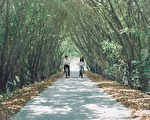 惊见龙猫秘境 隘寮溪绿色隧道骑铁马好疗愈