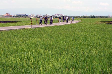 自行車輕旅行活動的三奇稻間的美麗稻浪。