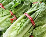美11州爆發大腸桿菌疫情 病源來自萵苣生菜