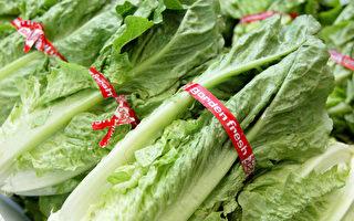 美11州爆发大肠杆菌疫情 病源来自莴苣生菜