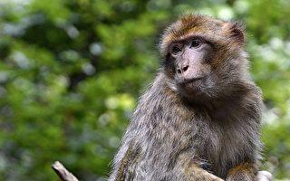 和人接触久了 猴子也这样洗澡 没想到它洗著洗著 最后还会使用这个冲澡……真是太厉害了!