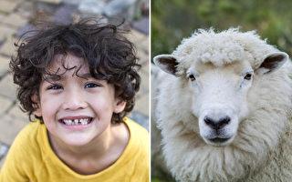 頭髮為何會自然捲?科學家在羊身上找到答案