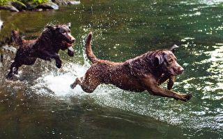 狗狗在激流中自导自演玩玩具 网友直呼好聪明