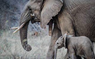 小象在森林里摇摇晃晃站不稳 他们发现后:原来是这样!