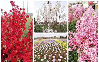 洛阳景点办花海节 牡丹鲜花变塑料假花