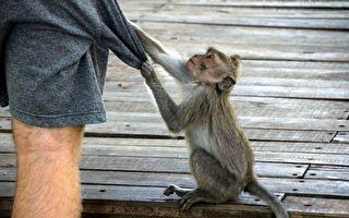 超迷你猴寶寶享受泡泡浴 模樣超迷人