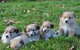 4隻小狗被丟進熱焦油 奇蹟獲新生可愛依舊